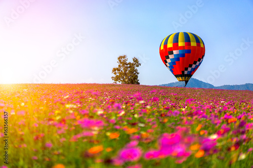 Spoed Foto op Canvas Ballon Landscape of beautiful cosmos flower field and hot air balloon on sky sunset