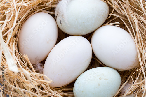 Duck eggs nest, spring Easter symbol.