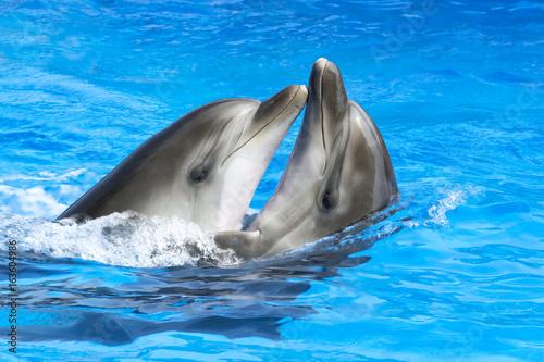 Plakat Delfiny kochają się nawzajem