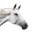 White horse on white background - 163615723