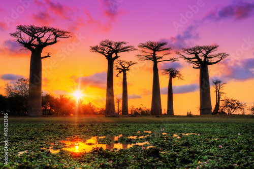 La pose en embrasure Arbre Beautiful Baobab trees at sunset at the avenue of the baobabs in Madagascar