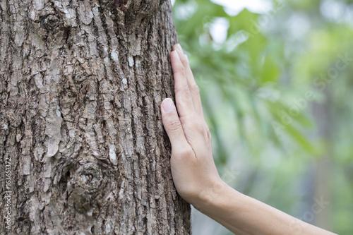 Fotografija  woman hand touching tree trunk, save environment concept