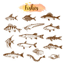 Fish Sorts And Types. Hand Drawn Vector Illustrations. Lake Fish In Line Art Style. Vector Sea And Ocean Creatures For Seafood Menu Design.