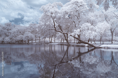 Fotografering  Infrared photography (color), Vachirabenjatas Park, land mark of Bangkok, Thailand