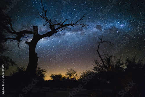 Photo Silhouette of dry tree and Milky Way. Galaxy at the night sky.