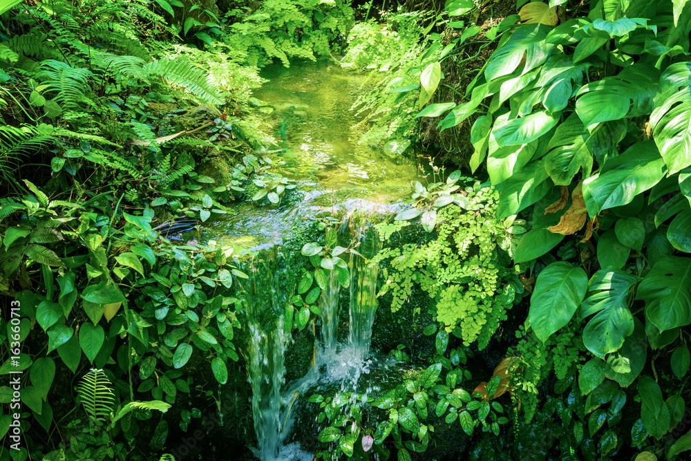 Fototapety, obrazy: 水辺の植物