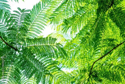 Foto  Tropische Pflanze