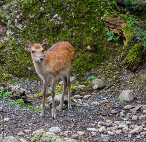 Fotobehang Ree Reh im Wald