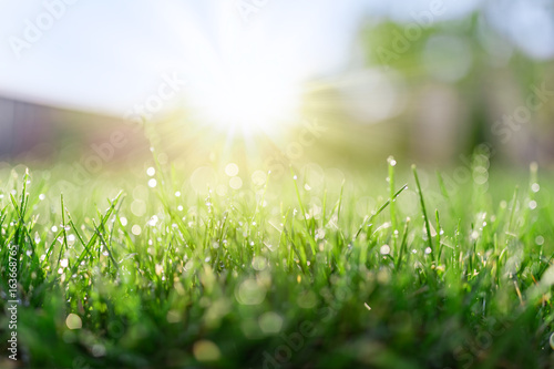 Poster Meadow Grass field in sunny morning