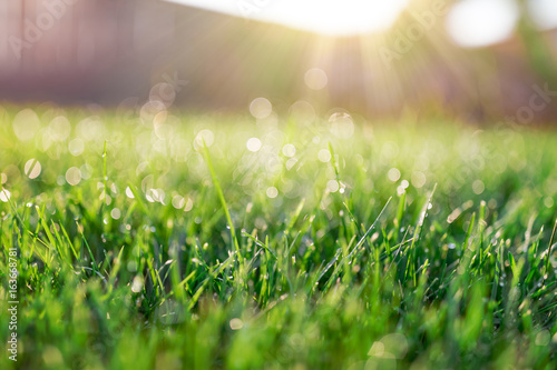 Fototapeta premium Pole trawy w słoneczny poranek