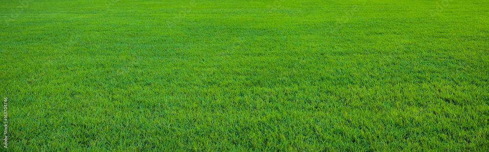 Fototapeta Background of beautiful green grass pattern