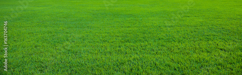 Background of beautiful green grass pattern © konradbak