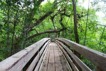 Fototapeta samoprzylepna Suspension Bridge / Nature Trail Through the Woods