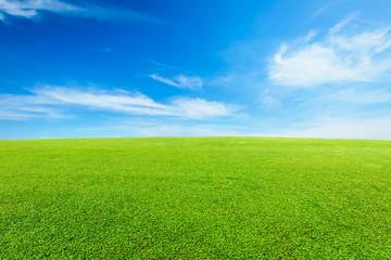 green grass under the blue sky