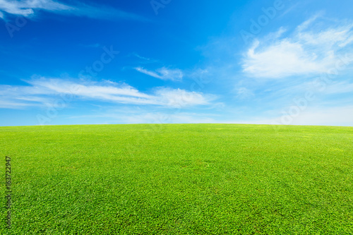 Spoed Foto op Canvas Gras green grass under the blue sky
