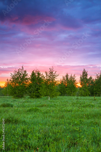 Poster Lichtroze summer rural landscape with forest, a meadow and sunrise
