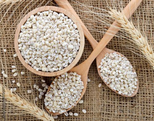pearls barley grain seed on background Wallpaper Mural