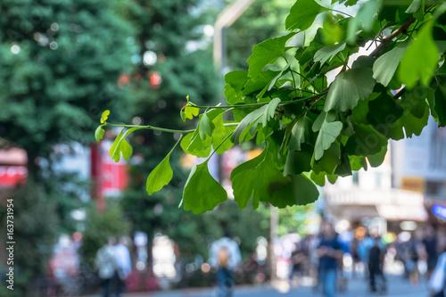 Photo Akihabara - 秋葉原 イチョウと歩行者天国1