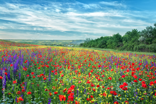 Foto auf Gartenposter Landschappen Beautiful field, wildflowers and red poppies