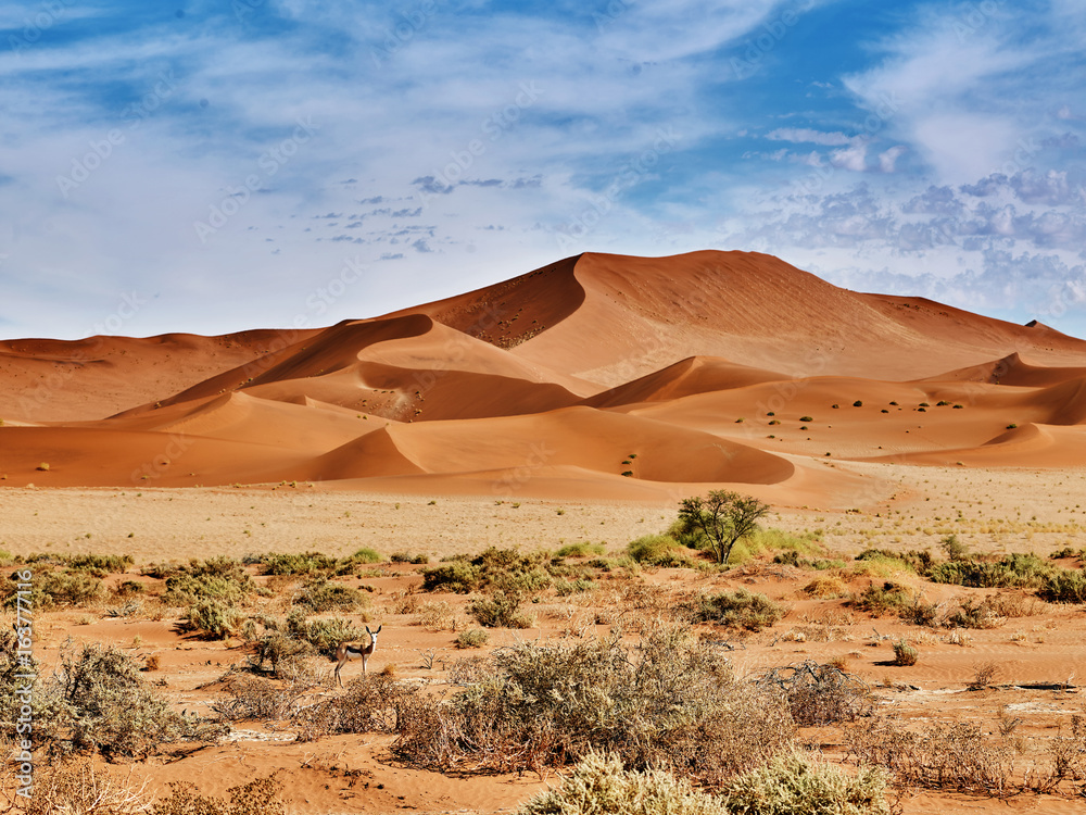 desert of namib with orange dunes