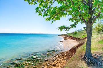 Fototapeta na wymiar Big green tree on the beach