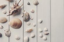 Seashells On White Wood, Sea Vacation Background