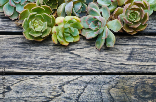 Cuadros en Lienzo Top view cute succulent plant with copy space for text on wooden table background