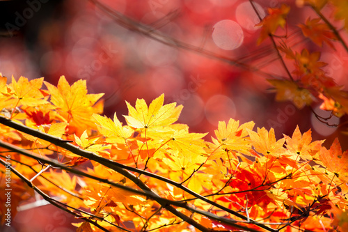 autumn  fall background Canvas Print
