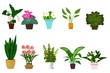 House plants isolated on white background. Set of flowers in pots . Vector illustration.