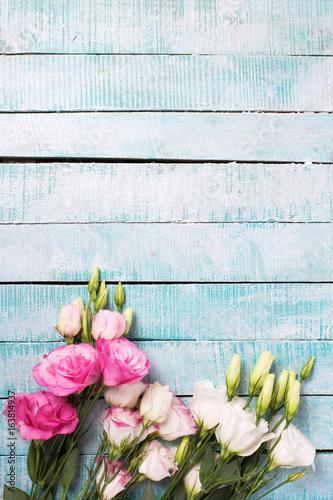 Fototapeta Border from pink and white eustoma flowers on blue wooden background.
