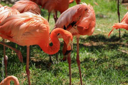 Garden Poster Parrot Pink flamingos