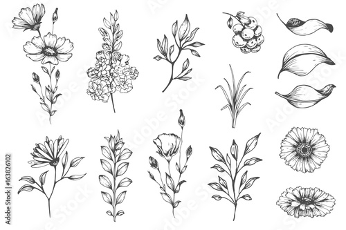 Fotografie, Obraz  Vector collection of hand drawn plants