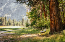 Walk Along The Picturesque Yosemite Park. A Lonely Bench And Majestic Nature
