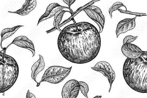 Cotton fabric Seamless pattern. Realistic fruit, branch and apple tree leaf. Black and white vegetarian food. Vector illustration art. Vintage engraving. Hand drawing. Template with nature motifs for kitchen design