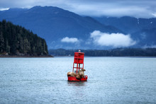 Alaska Cruise Travel Nature Wildlife Sea Lions On Buoy In Juneau. Stellar Seals Sleeping In Auke Bay.