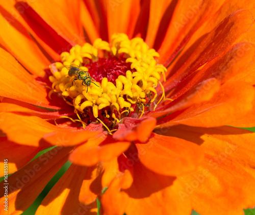 Fotobehang Pop Art Bee in Flower
