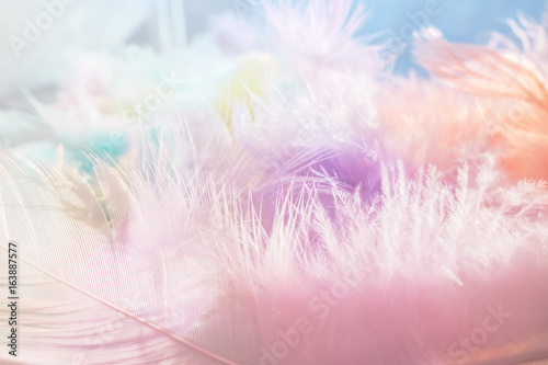 Soft multicolor feather background