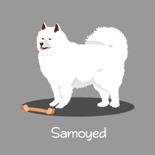 An Illustration Depicting Samoyed Dog Cartoon.vector