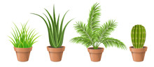 Different Plant Collection In ...