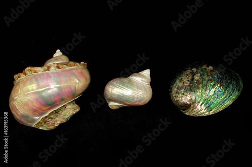 Valokuva  Abalone Mother of Pearl Sea Shells
