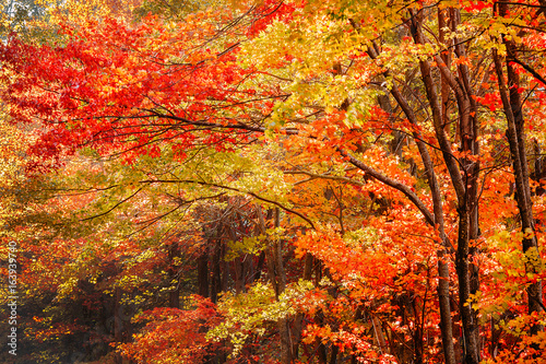 Fall Leaves In The Blue Ridge Mountains Near Asheville North