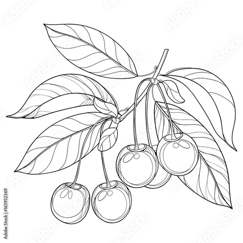 Outline Images Of Cherries