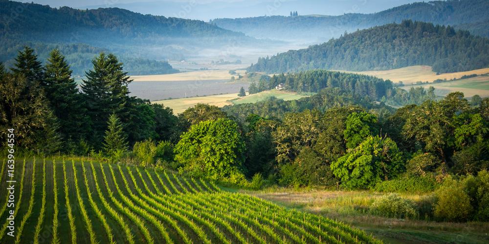 Fototapety, obrazy: Willamette Vallley, Wine Country