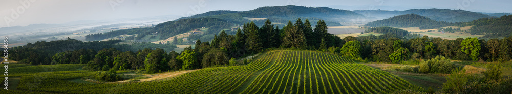 Fototapety, obrazy: Willamette Vallley, Wine Country panorama
