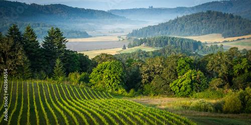 Fototapeta Willamette Vallley, Wine Country obraz