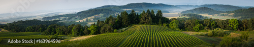 Photo Stands Vineyard Willamette Vallley, Wine Country panorama
