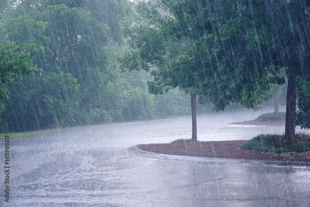 Fototapeta heavy rain and tree in the parking lot