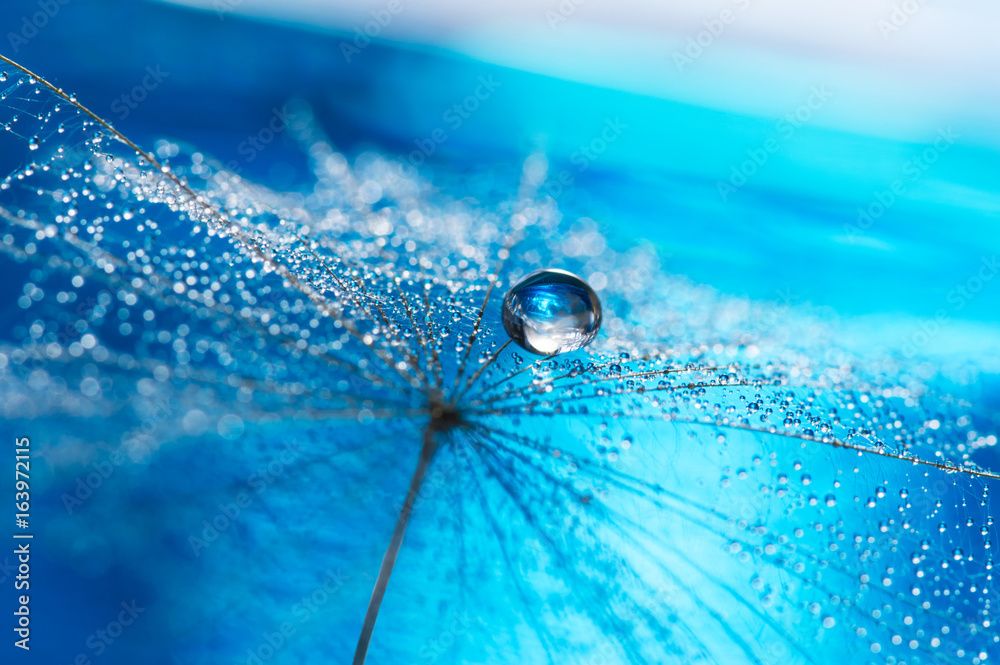 Fototapety, obrazy: Beautiful dew drops on a dandelion seed macro. Beautiful soft light blue and violet background.