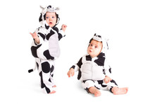 Two Babes In A Fancy Dress Cow Costume On White Background