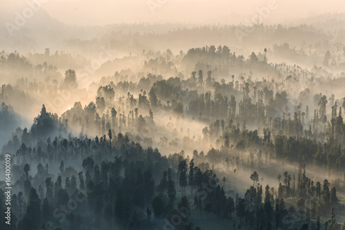 Poster Morning with fog Coniferous Forest with sun beam at Bromo Tengger Semeru National Park, East Java, Indonesia